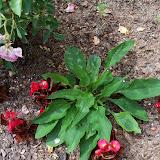 Gardening 2010 - 101_1060.JPG