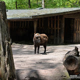 79_Tierpark-Nürnberg_06.05.16_©AlexanderLanzloth.jpg