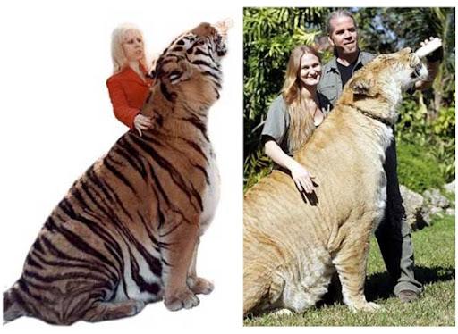 Comparação de  tamanho entre  animais  e   Seres humanos - Página 2 2