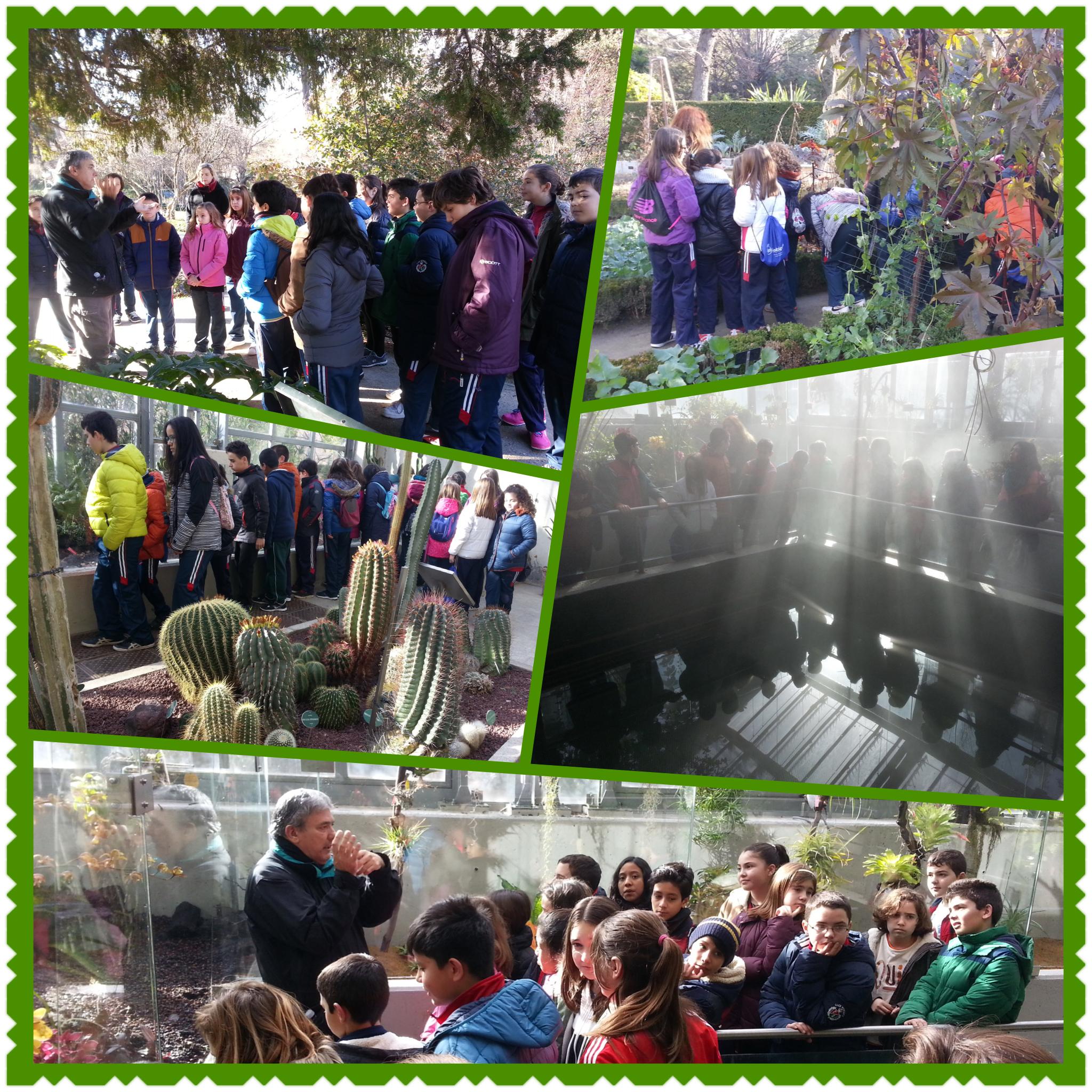 Visita al jard n bot nico el blog de 5 y 6 for Actividades jardin botanico 2016