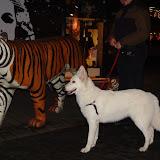 KNON puppys in de stad nov 2008 - DSC09040.JPG