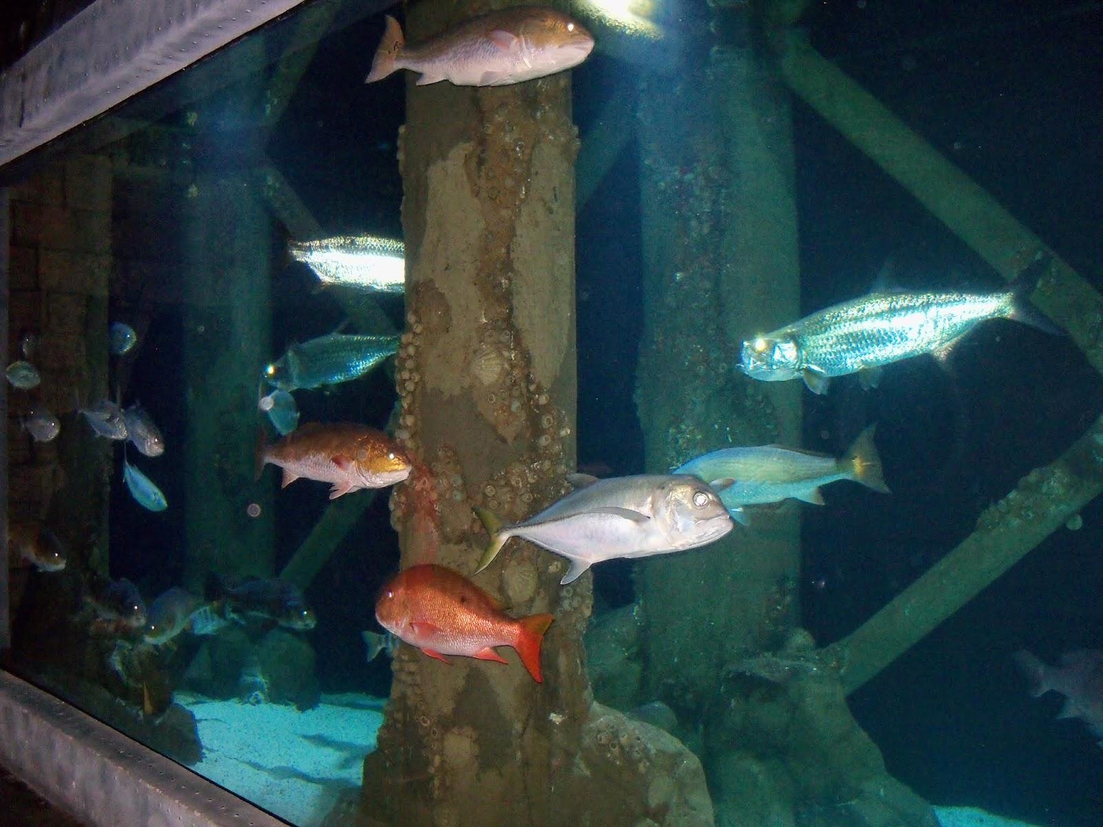 Downtown Aquarium - 116_3905.JPG