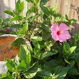 Gardening 2012 - 115_1751.JPG