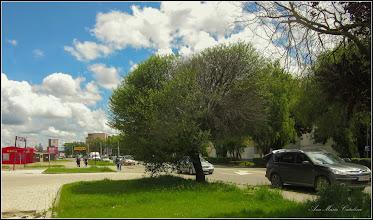 Photo: Vișin Turcesc (Prunus Mahaleb)  - din Turda, Calea Victoriei - 2019.05.30
