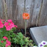 Gardening 2011 - 100_8175.JPG