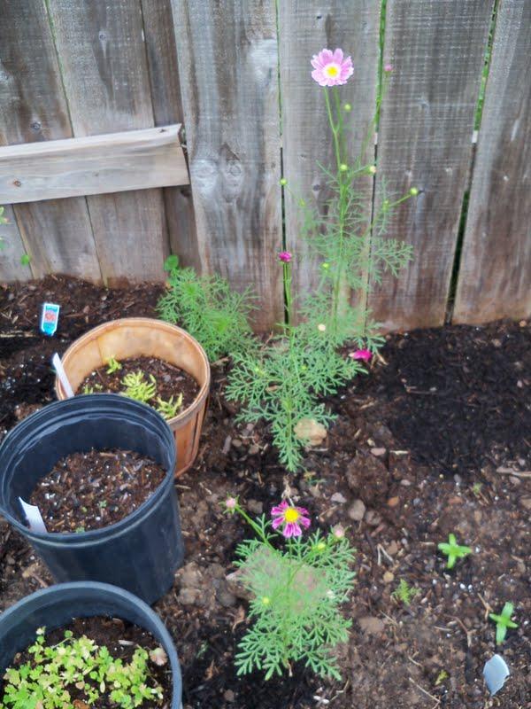 Gardening 2010 - 101_1571.JPG