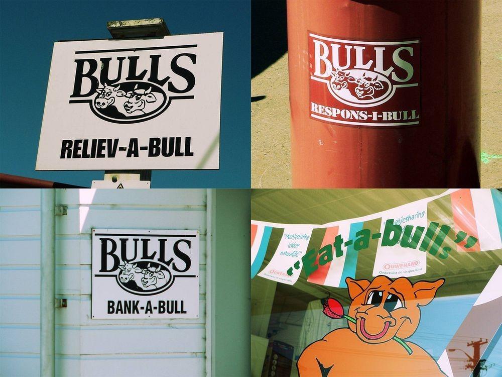 bulls-new-zealand-1