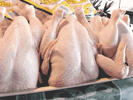 ayam non organik yang berbahaya bagi kesehatan