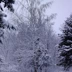 Зимняя уборка в Дендрарии 050.jpg