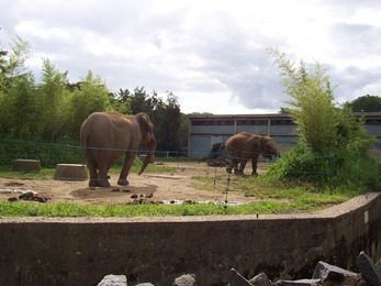 2007.07.05-007 éléphants d'Asie