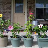 Gardening 2010, Part Three - 101_4959.JPG