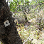 One of many track markers bolted to a tree (102433)