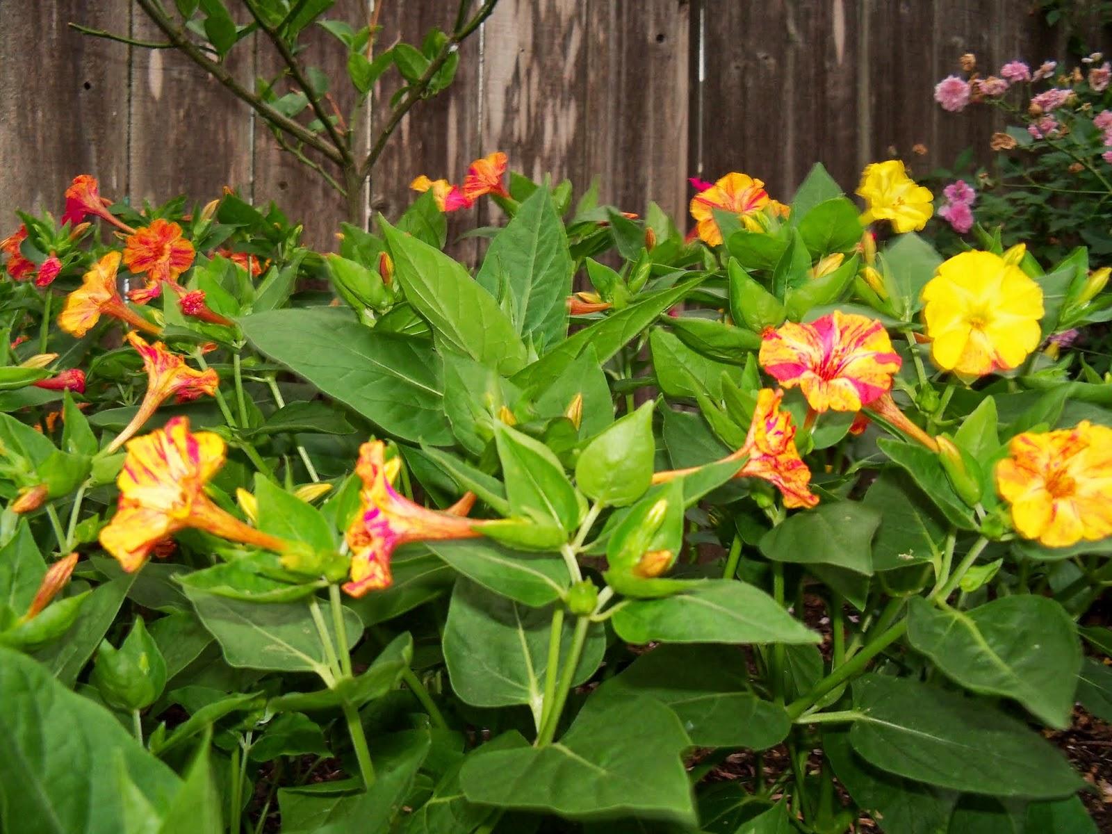 Gardening 2014 - 116_1965.JPG