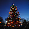 Somers Tree Lighting