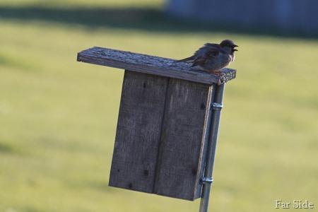 Noisy neighbor bird