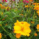 Gardening 2013 - 115_5985.JPG