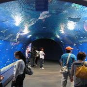 wielkie akwarium Hurghada.jpg