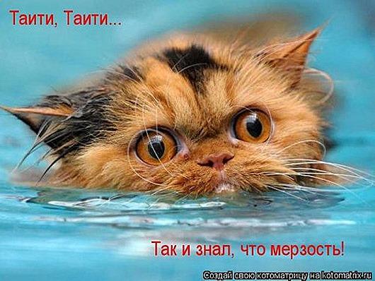 1449230485_kotomatrica-37