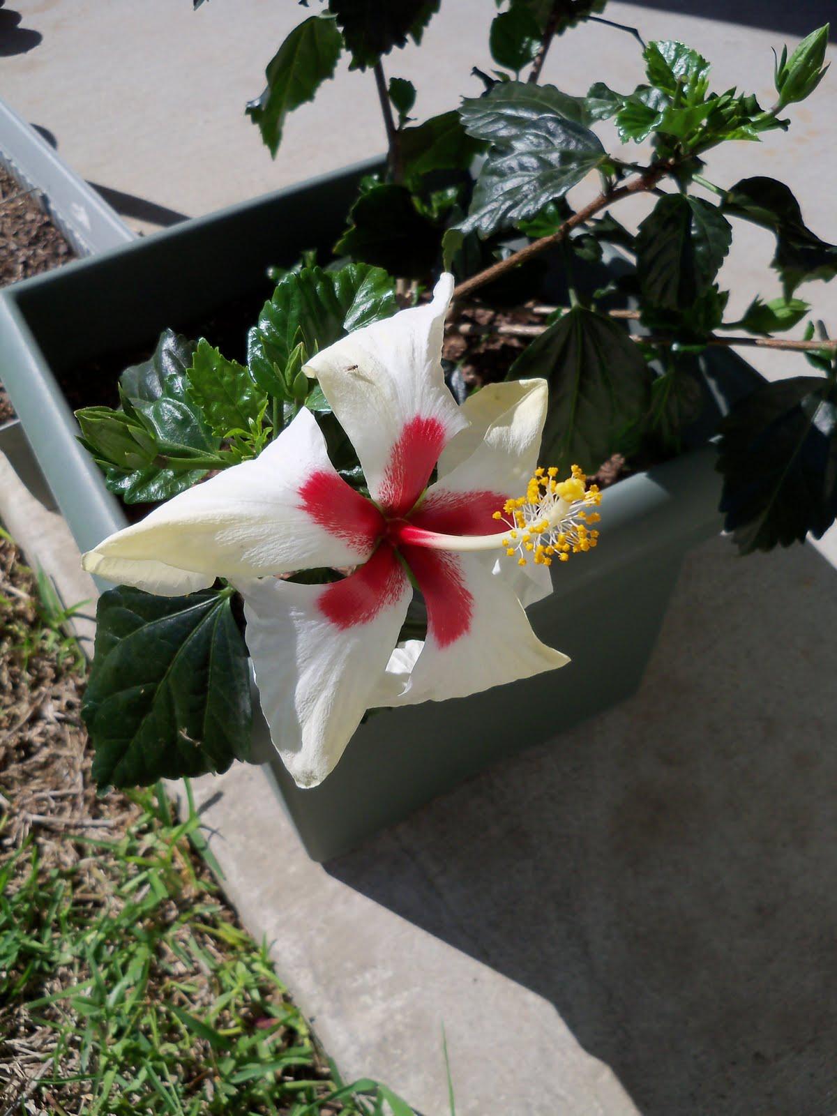 Gardening 2010 - 101_1356.JPG