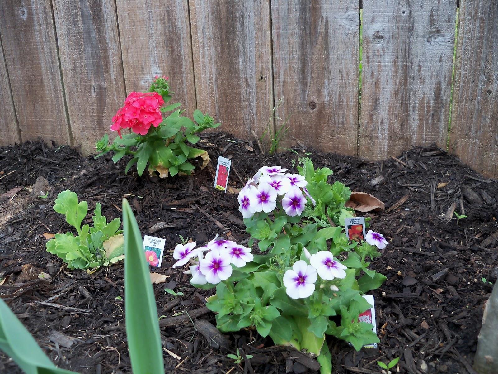 Gardening 2011 - 100_6799.JPG