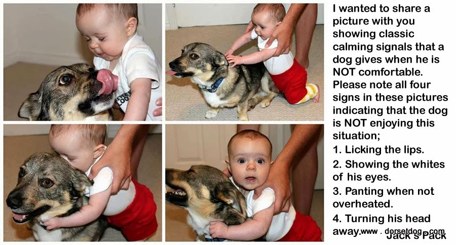 Baby abusing dog whilst the baby is being held by an adult