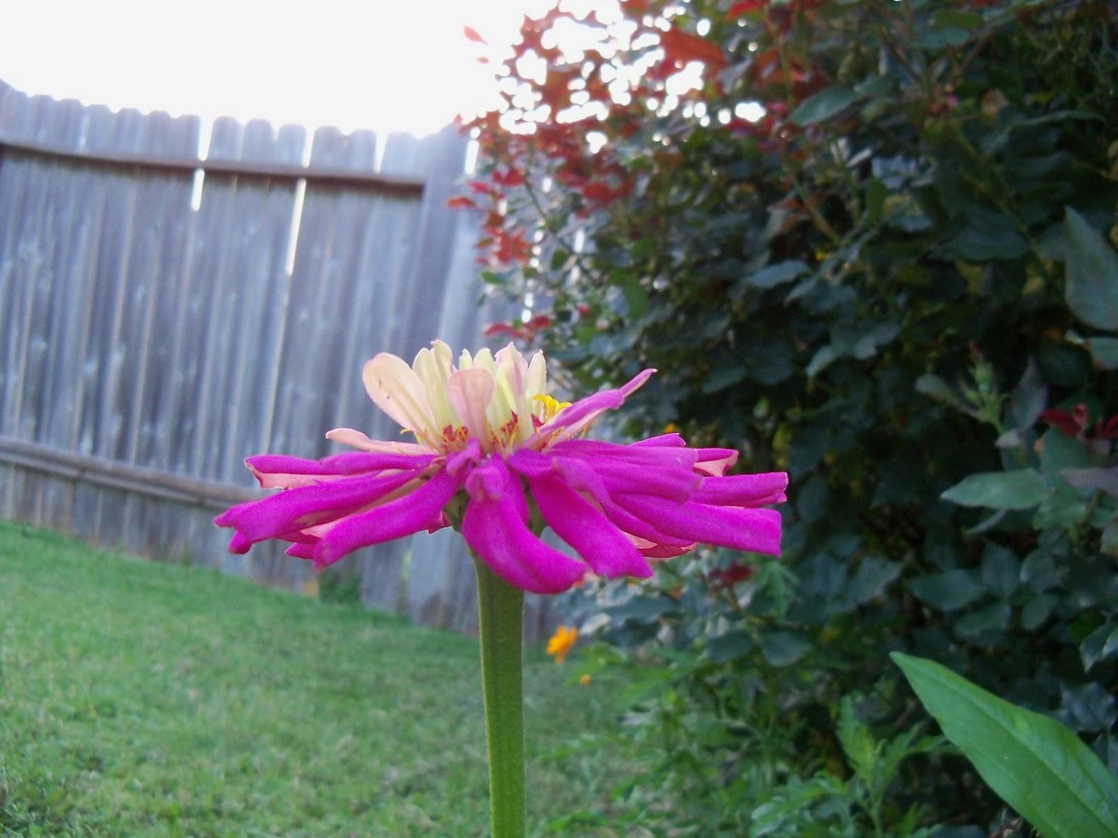 Gardening 2012 - 115_2043.JPG