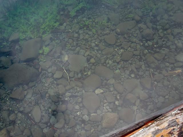 May 2014 Wynoochee Lake Camp/Canoe - CIMG5224.JPG
