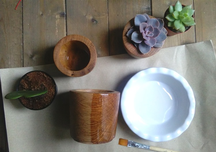 suculents and wooden pots