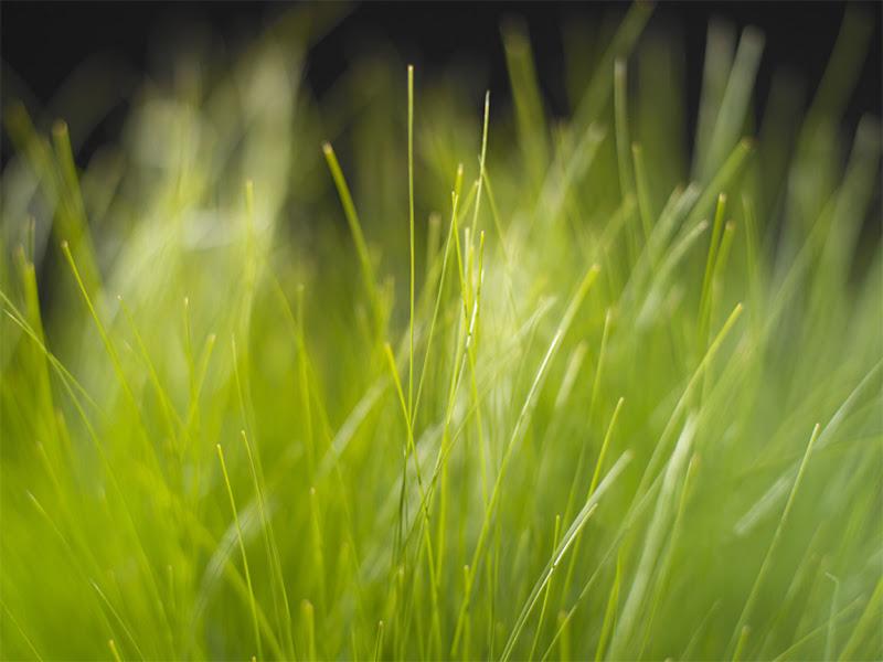 Keynote Grass, Beautiful Places 3