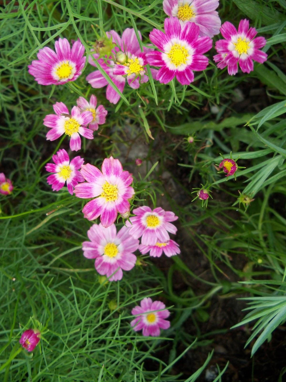 Gardening 2010, Part Three - 101_3958.JPG