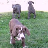 Jasper- born on 4/2/2010 - IMG_1396.JPG