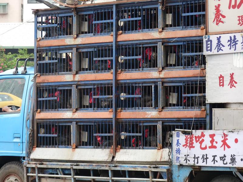 Xizhi. Le stock de poulets et la cuisine a l'arrière.Efficace