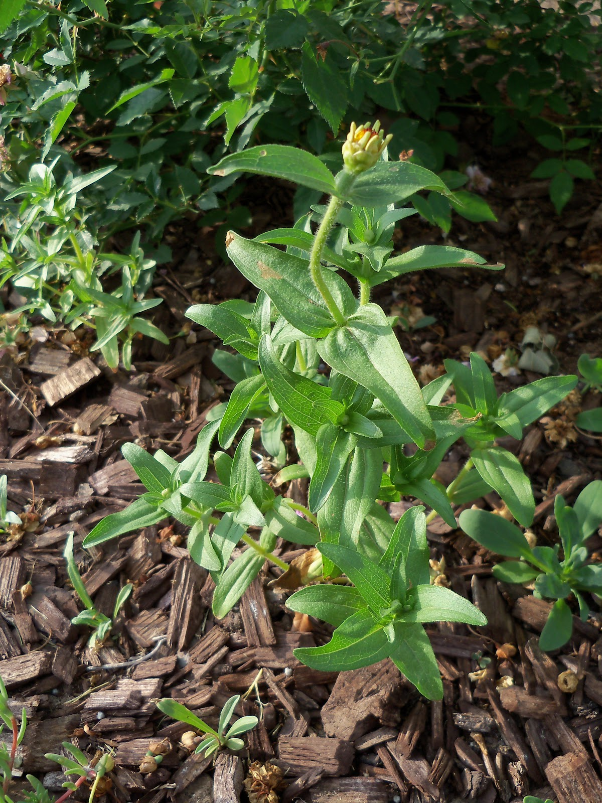 Gardening 2010, Part Two - 101_2069.JPG