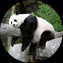 Bamboo La fiale :