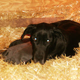 Star & True Blues February 21, 2008 Litter - HPIM0940.JPG