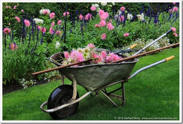 160906_Butchart_Gardens_0057