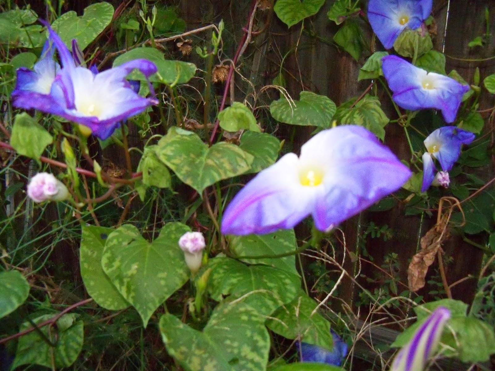 Gardening 2014 - 116_5264.JPG