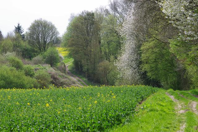 Les Hautes-Lisières (Rouvres, 28), 16 avril 2015. Photo : J.-M. Gayman