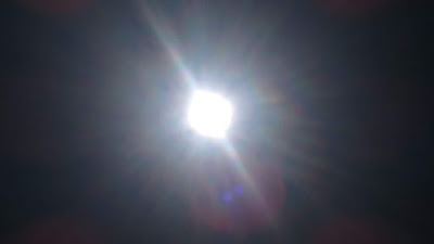ヴィーガン逗子太陽1DSC_0338.JPG