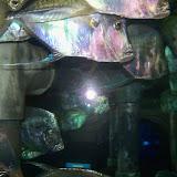 Downtown Aquarium - 116_3835.JPG