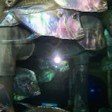 Downtown Aquarium - 116_3835.JPG
