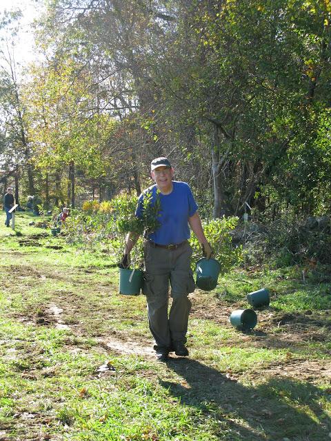 Guilford Salt Meadows Sanctuary Planting - IMG_7803.JPG