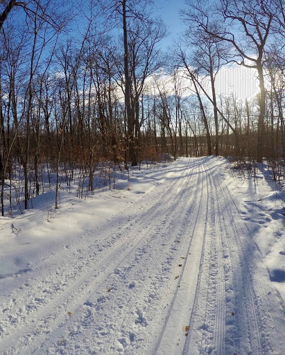 Sukkerbusk ski trail late afternoon February 15th, 2017
