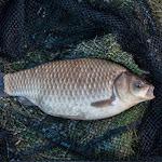 20150427_Fishing_Prylbychi_078.jpg
