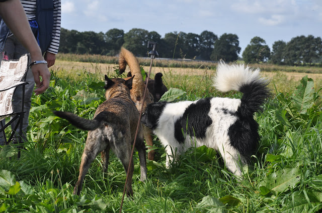 Survival voor Baas en Hond 2012 - DSC_0103.JPG