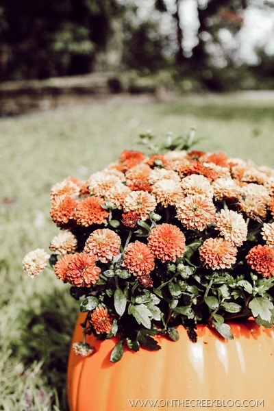 Fall mums in a ceramic pumpkin