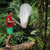 Jeune femme collectant des Morphos. La Source près de Cacao (Guyane). 27 novembre 2011. Photo : J.-M. Gayman