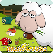 sheep online
