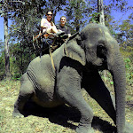 Riding an elephant at Yok Don National Park!