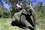 Riding an elephant at Yok Don National Park!